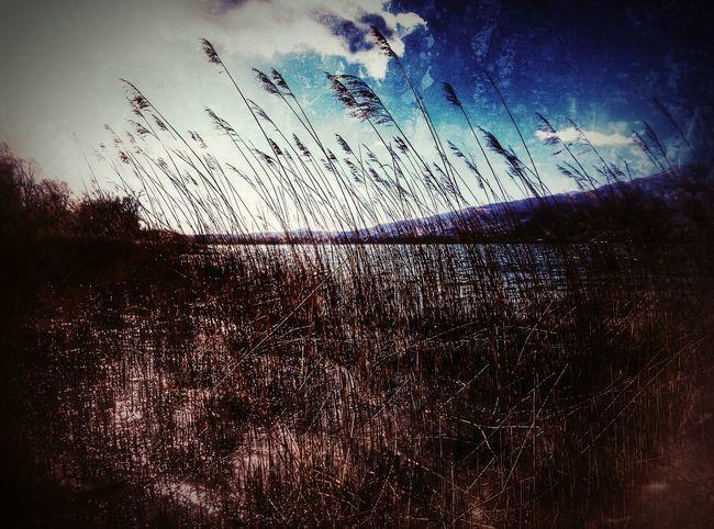 Lake View Melancholic Landscapes