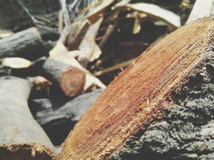 Close-up No People Outdoors Day Nature Wood Wooden Texture Wood - Material Wood Stomp Cut Wood Breathing Space Investing In Quality Of Life Mix Yourself A Good Time
