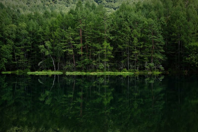 Green Green Green!  Green Nature Mountain Japan Copy Space Backgrounds Green Green Color Plant Tree Growth Lake Water Tranquility Reflection Beauty In Nature Tranquil Scene Forest No People Lush Foliage Scenics - Nature Non-urban Scene Nature Waterfront Day Land Outdoors