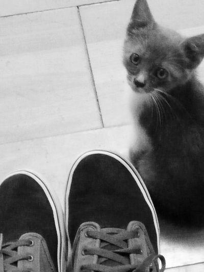 Pets Domestic Cat Shoe First Eyeem Photo