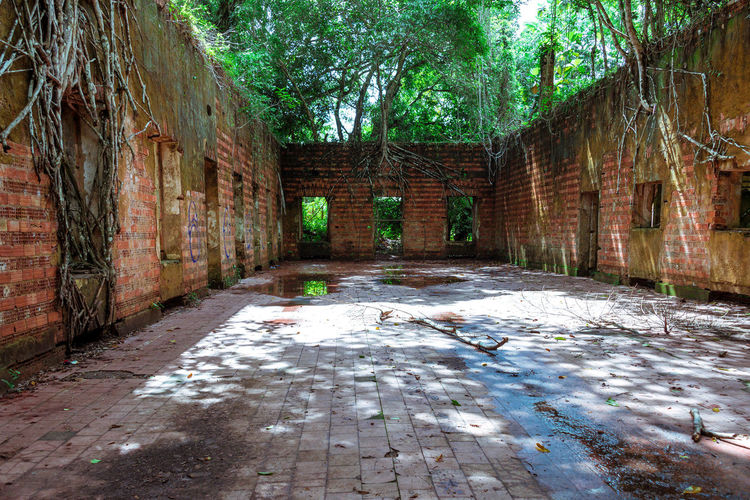 Ruins of Paricatuba Abandoned Buildings Amazon Amazonas Architecture Built Structure Leaf Nature No People Paricatuba Ruins Tree Tree Roots Torn Out Of Ground