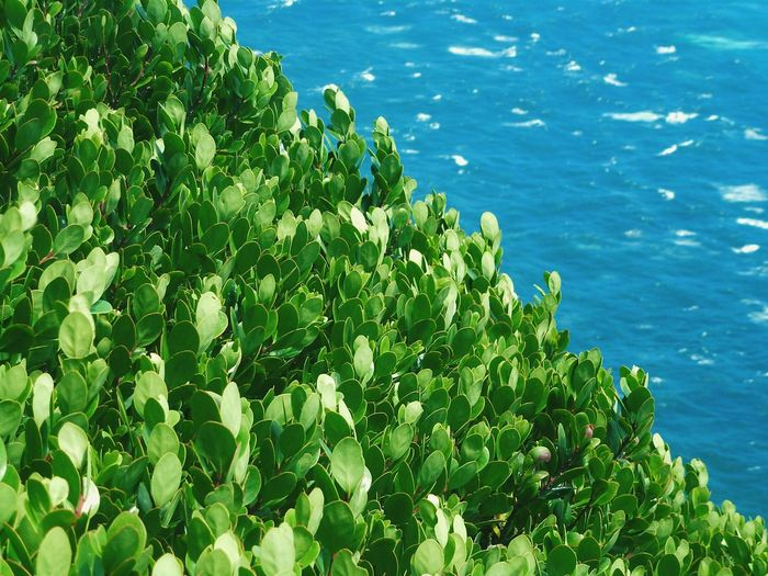 Cape Point, Cape Peninsula Leaves_collection Green Color Beauty In Nature Leaves And Light Leafs Green Green Green!  Green And Blue Green Leaves Green And Ocean Nature_collection Nature Photography Nature_perfection Nature_collection Nature Nature's Diversities