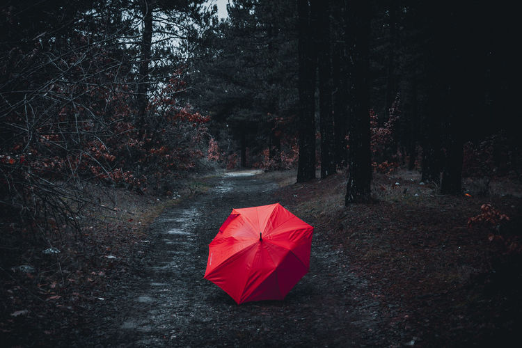 View of red umbrella in forest