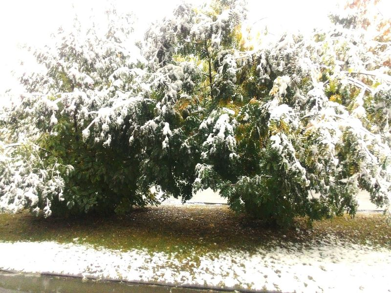 October Snow Tree Snow Day ❄ Snow ❄ Snow Covered