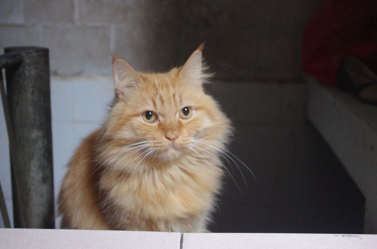 my lovely cat <3 Cat Domestic Cat Ginger Cat Indoors  Lovely Makemyday No People Pets Portrait