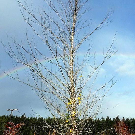 Nature Sky Sunlight Outdoors Beauty In Nature Tree Rainbow Beauty In Nature Autumn