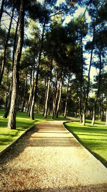 The forest road is for lonely people. Çamlık Green Color Cloud - Sky Sky Lonely Road Forest Tree The Way Forward Nature Day Growth Beauty In Nature Tranquility Grass No People Outdoors Sunlight