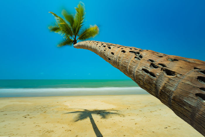 Tropical Paradise Art Wall Art Palmtree Palm Tree Beach Beachphotography Beauty In Nature Beauty In Nature Vacations Blue Sky Dream Eye4photography  Backgrounds Ocean Palm Trees Sand & Sea Sea Been There. Tranquil Scene Tranquility Tropical Holiday Fine Art Photography Travel Destinations Summer Exploratorium
