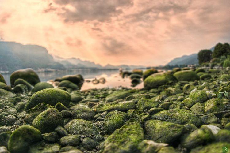 Moss on rocks at sunset