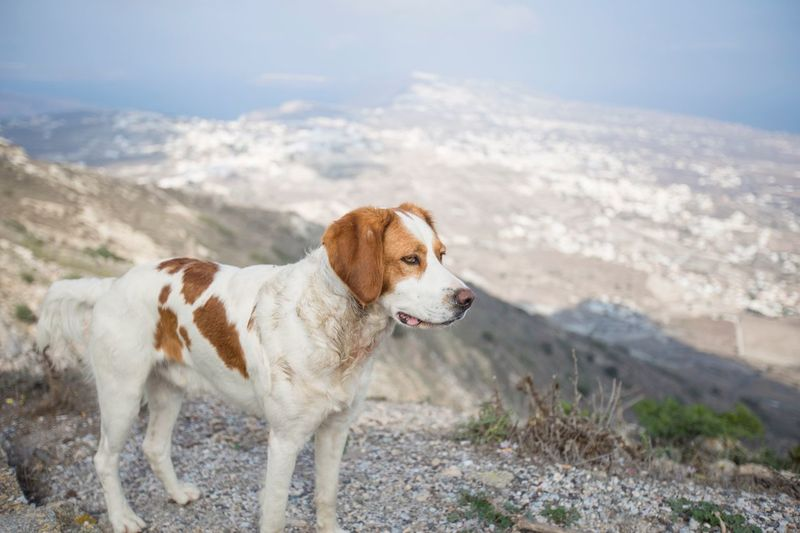 Dog looking away on mountain against sky