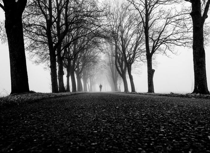 Surface level of bare trees in foggy weather