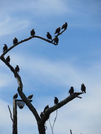 The birds are come, the birds are coming... they're here! Tree Sky Branch Low Angle View Plant No People Nature