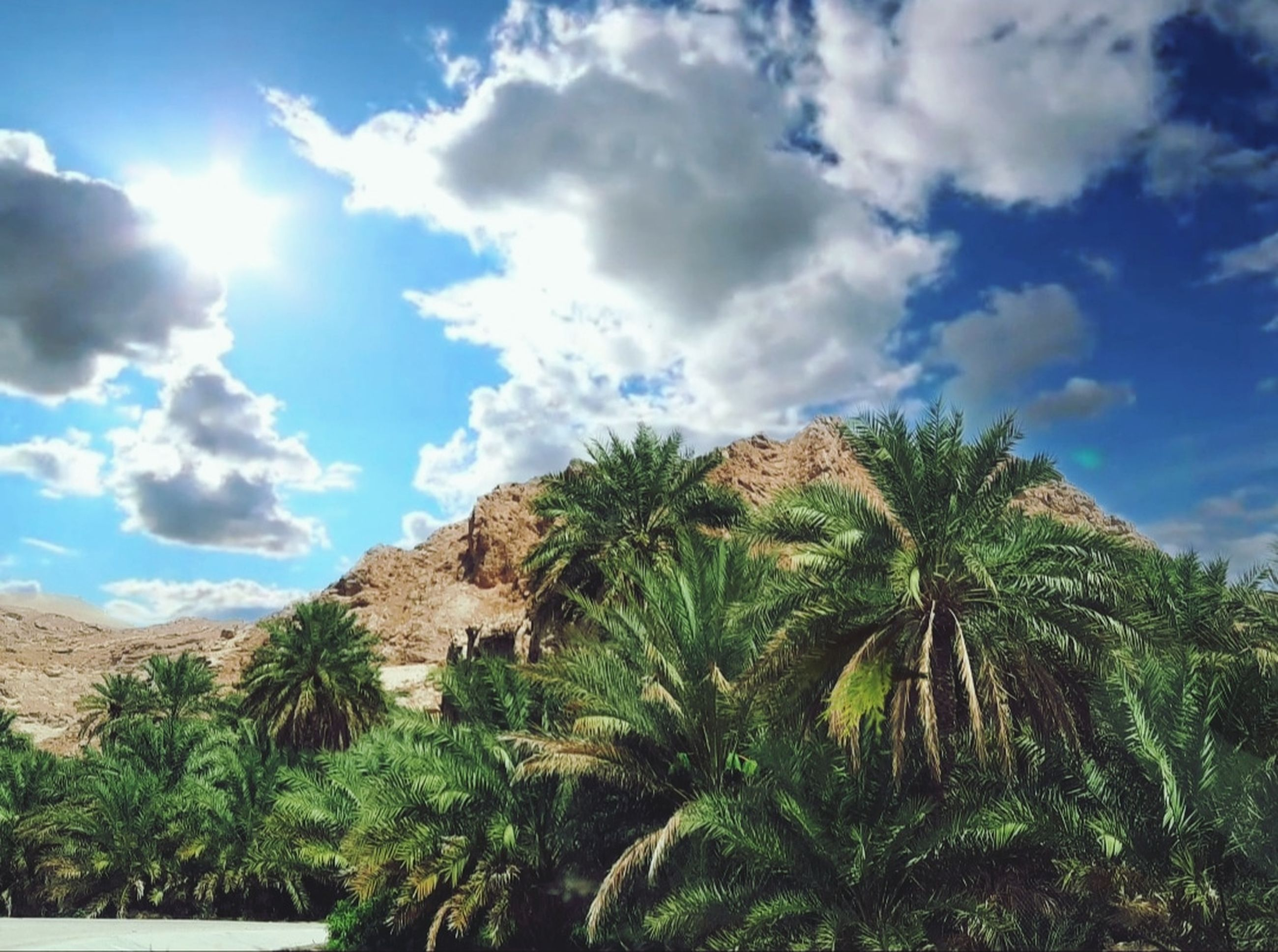 sky, plant, cloud, palm tree, tree, tropical climate, nature, beauty in nature, scenics - nature, environment, landscape, land, tropics, no people, sea, travel destinations, growth, mountain, day, outdoors, travel, tranquility, blue, sunlight, vacation, green, tranquil scene, coast, tourism, non-urban scene, date palm tree