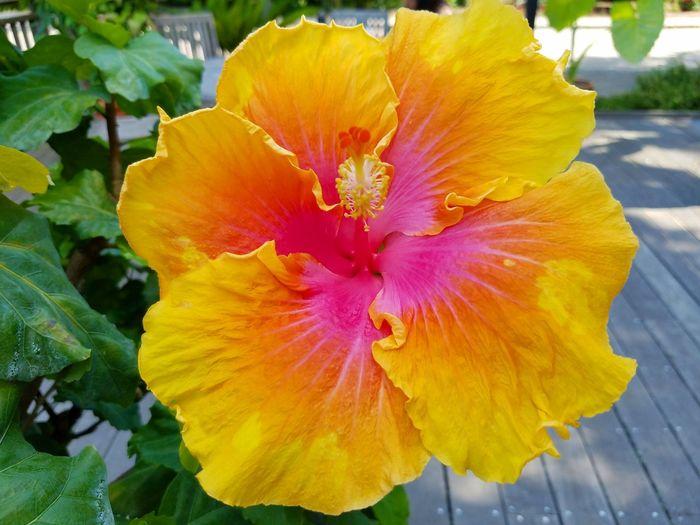Flower Flower Photography Arboretum