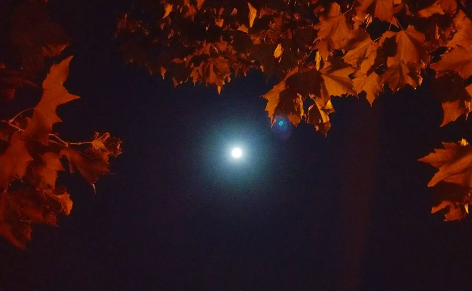 Waiting for the perfect frame. The night when the full moon shined brightly. Overnight Success Midnight Walk Full Moon Night  Bright Night Moon And Leaves Silhouette Chance Encounters