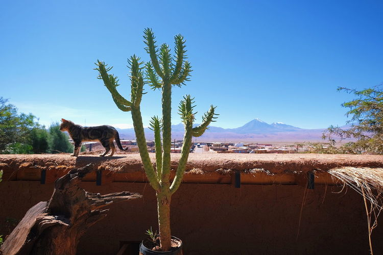 The Week On EyeEm Nature Desert Mountain Plant Sky Outdoors Cats Cactus Landscape Arid Climate No People Day in San Pedro De Atacama , Chile