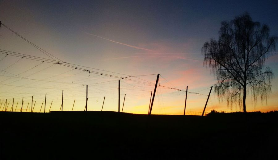 Hops Hopfen Hallertau Bayern Bavaria Sunset Sunset_collection Sunset Silhouettes Sky Skyporn Sky_collection Sky And Clouds Tree TreePorn Auntumn Nature_collection Nature Landscape