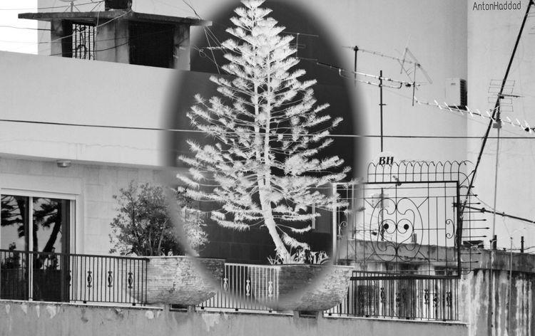 negative tree Bnw_collection Shootermag Monochrome Architecture Urban Geometry NEM Black&white Bnw_society Bnw_magazine AMPt Community Taking Photos