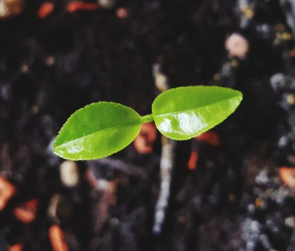 Close-up of young plant growing outdoors