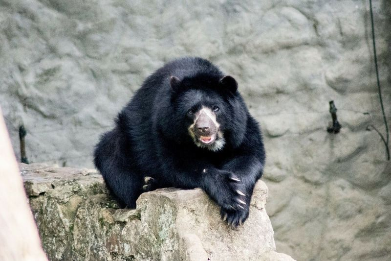 Close-up of bear on rock