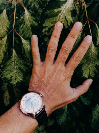 High angle view of hand holding clock against plants