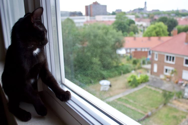 Cat Cats Of EyeEm Black Kitten Black Cat Staring At The World Staring Window Appartment View Domestic Animal Pets One Animal No People Day Domestic Animals Curious Sad Animal Themes Glass - Material Looking Through Window Window Sill