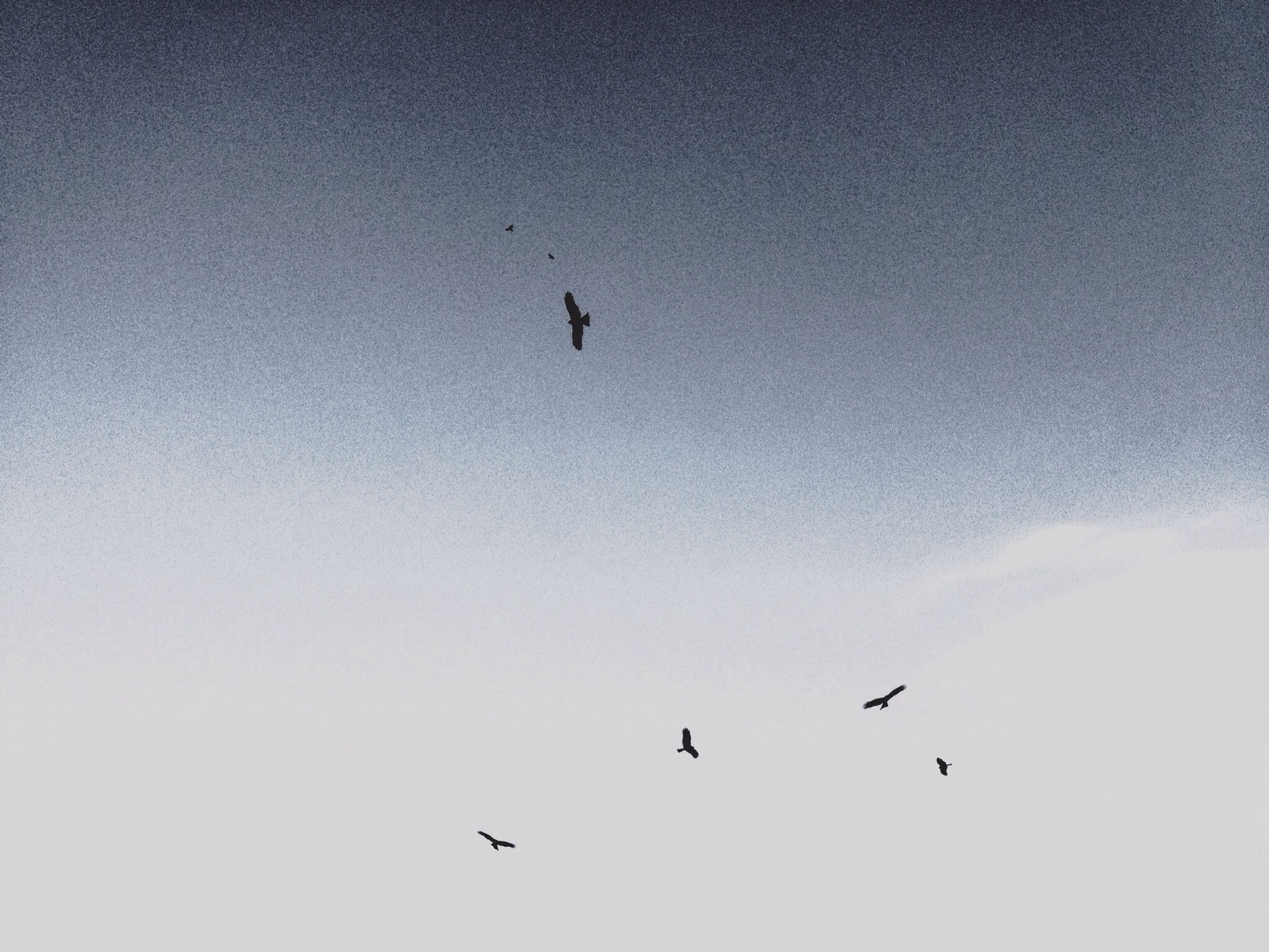 bird, low angle view, flying, animal themes, animals in the wild, wildlife, silhouette, mid-air, sky, spread wings, clear sky, blue, one animal, copy space, nature, beauty in nature, outdoors, no people, flock of birds