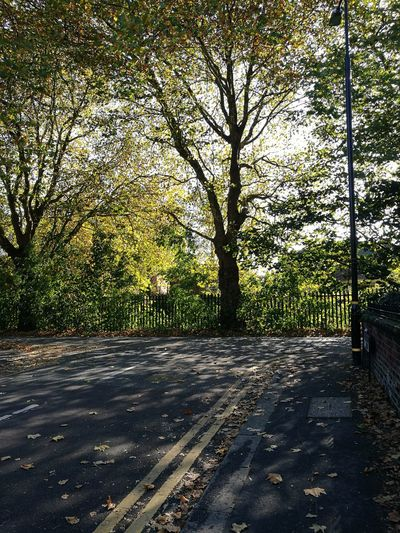 Leaves 🍁 Leaves Autumn Light Light And Shadow Trees And Sky No People Tree Shadow Road Sky Empty Road Tranquil Scene Fallen Leaf Fall Autumn Mood
