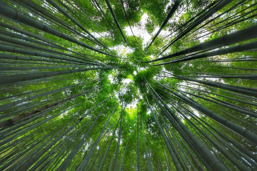 고갤들어 하늘을 보고 어깨를 쭉 펴고 힘찬 오후! . . #보성녹차밭옆대나무숲 #대나무숲 #대나무 #5dmark4 #시그마1224 sigma1224 Green Color Nature Tree Bamboo - Plant Low Angle View Full Frame Bamboo Grove Forest Beauty In Nature Backgrounds Growth Outdoors Day No People Freshness Sky