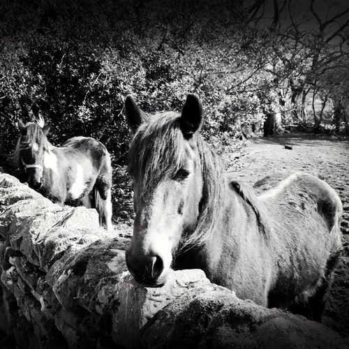 Blackandwhite Animals Horses