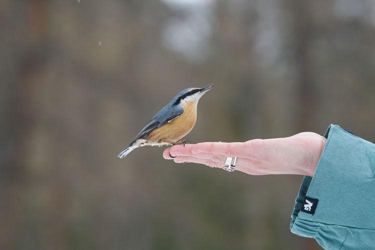 Hand holding bird