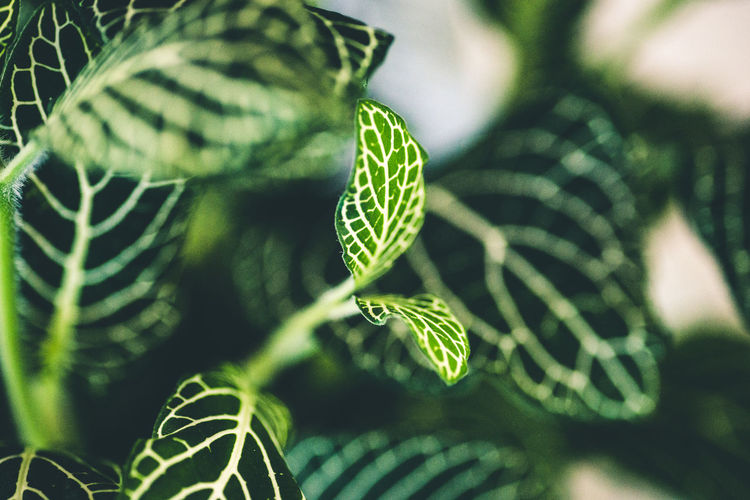 Beauty In Nature Close-up Day Fern Fragility Freshness Green Color Growth Leaf Nature No People Outdoors Plant