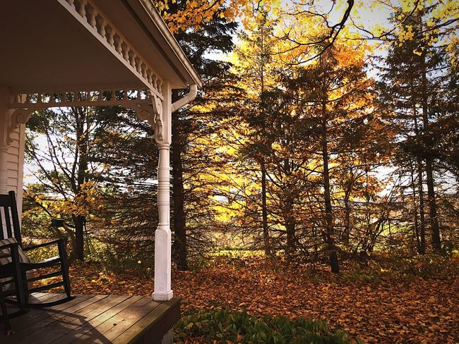 Frontporch Bed And Breakfast Nature Leaf Sky Tree Autumn Shadows & Lights Day Outdoors Forest Grass Change Porch Calm Growth Scenics Beauty In Nature Changing Seasons No People Rockingchair Outdoor Photography Leaf 🍂 Rural Scene Tranquil Scene Serenity Nature_collection Tree Area