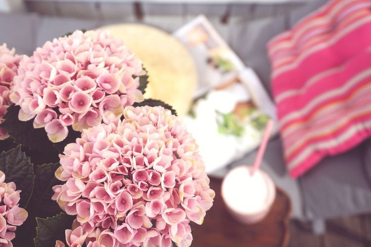 enjoying the summer Smoothie Summer Summertime Relax Relaxing Veranda Read Reading Magazine Sunbed EyeEm Selects Flower Flower Head Pink Color City Close-up Blooming Blossom Hydrangea