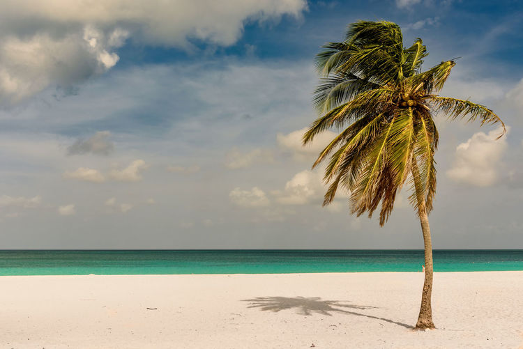 Eagle Beach, Aruba Palm Tree Beach Beauty In Nature Caribbean Cloud - Sky Day Dutch Caribbean Horizon Over Water Idyllic Island Nature No People Outdoors Palm Tree Paradise Resort Sand Scenics Sea Sky South America Summer Tranquil Scene Tranquility Tree Tropical Water