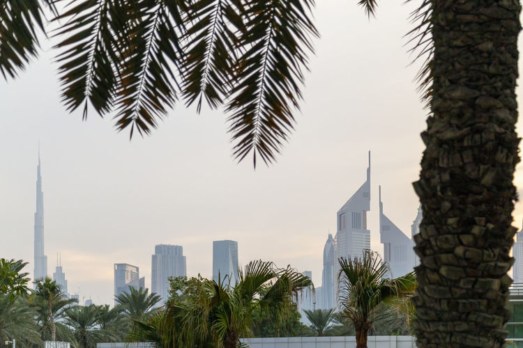 Low angle view of palm trees and buildings