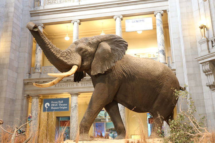 View of elephant statue