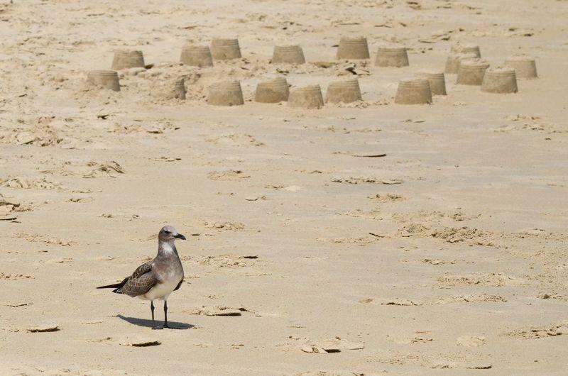 Gull and