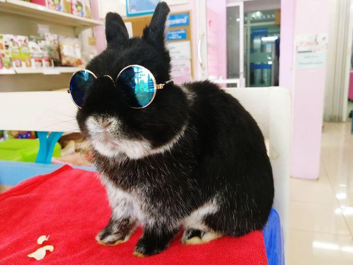 Nd Rabbit Animal Hospital Cute Cat Bunny  Rabbit Cute Rabbit ,bunny Pets Black Color