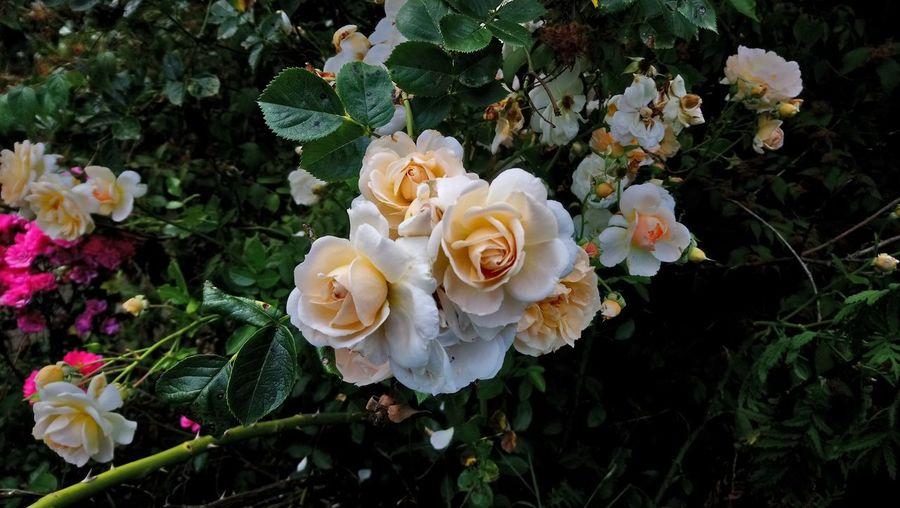 Flower My Best