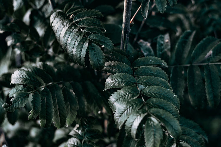 Leaf Plant Part Plant Growth Green Color Close-up Beauty In Nature No People Nature Day Focus On Foreground Food And Drink Food Tranquility Freshness Outdoors Selective Focus Tree Land Leaf Vein Leaves