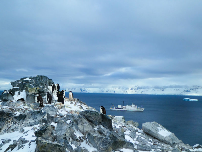 Antarctica Chinstrap Penguin Expedition Expedition Ship Peace Beauty In Nature Cloud - Sky Day Horizon Land Nature Outdoors Penguin People Rock Rock - Object Rock Formation Scenics - Nature Sea Ship Sky Tranquil Scene Tranquility Vessel Water