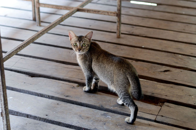 Animal Themes Day Domestic Cat Feline Mammal No People One Animal Outdoors Sitting Wood - Material