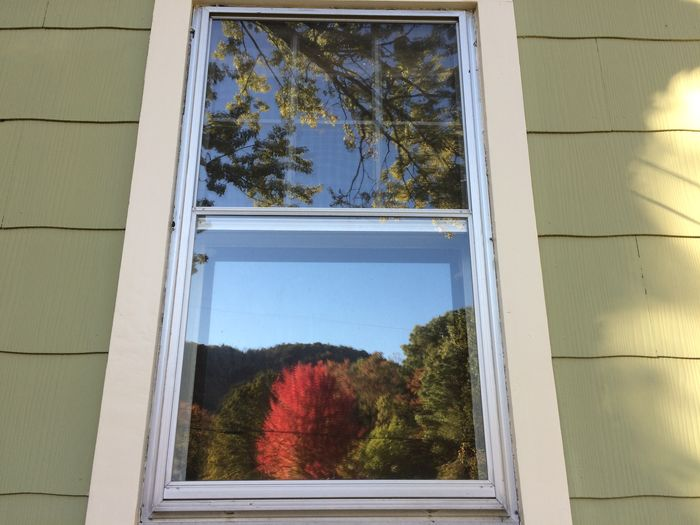 Reflection of trees in front of window