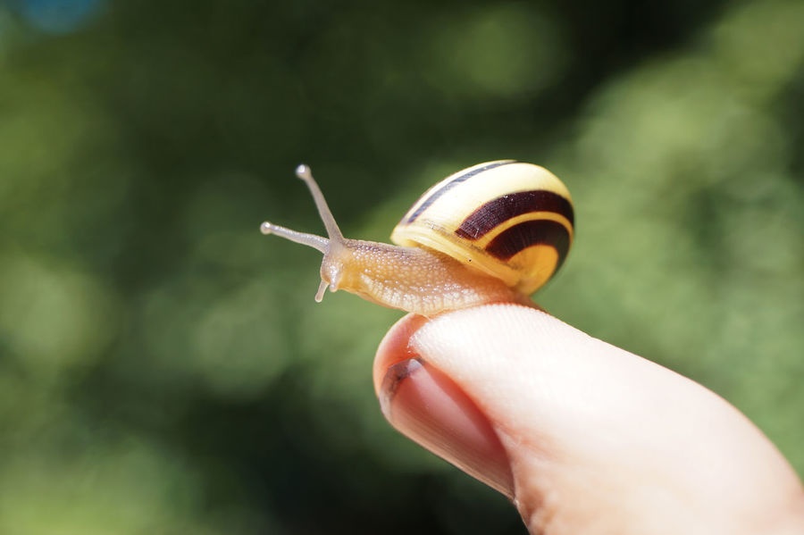 Adventure Club Close-up Cropped Day Fine Art Photography Finger Focus On Foreground Holding Human Finger Lifestyles Nature On The Way Outdoors Part Of Person Selective Focus Snail Snail Snails Unrecognizable Person