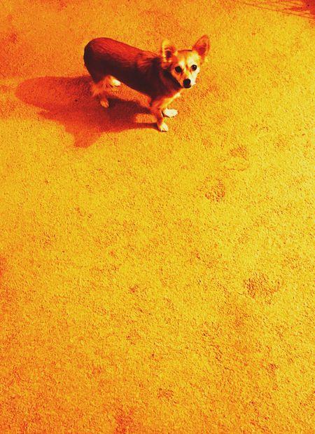 Lucy Portrait Pet Animal Dog Pets