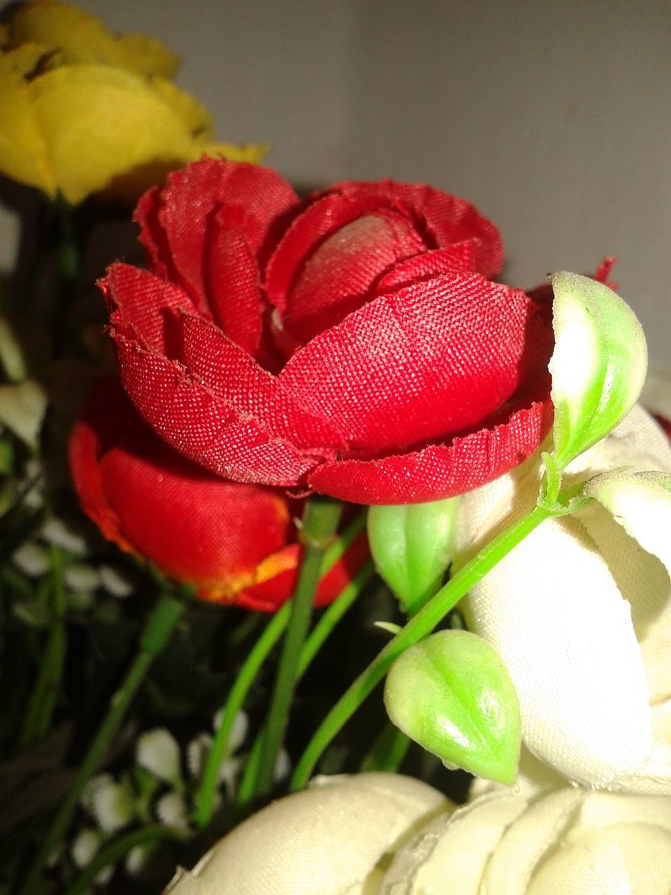 close-up, red, no people, flower, freshness, growth, nature, indoors, leaf, fragility, beauty in nature, flower head, day