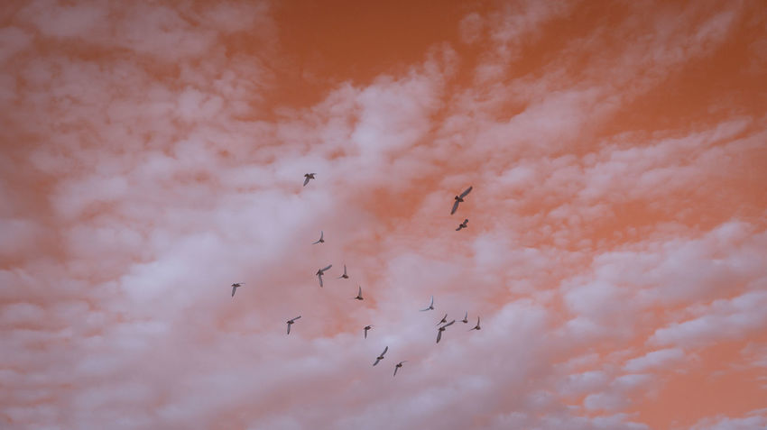Sky Is The Limit but only for the Birds 🐦 🐦 🐦 Limited Flying Bird Flock Of Birds Animal Wildlife Animals In The Wild Airshow Teamwork Nature Surreal Sky Imagination Orange Limitless Minimalism Minimal Minimalistic Minimalist Minimalart Minimalarchy Mobilephotography Streetphotography Beauty In Nature