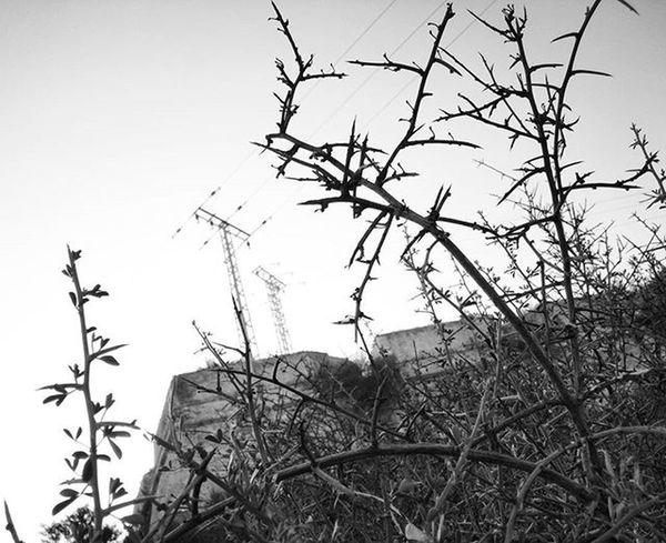 Pylons & Thorns 1 Blackandwhitephotography Blackandwhite Bnw Bnw_maniac Bnwlovers Monochrome Bnw_lover Bnw_lovers Mono
