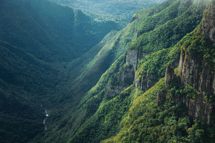 Fortaleza canyon with steep cliffs with forest and river in the bottom, near cambará do sul, brazil.